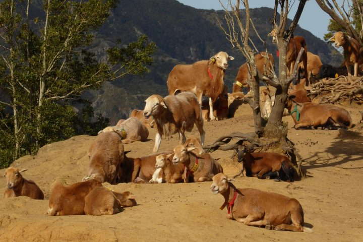 Excursion de Chinamada